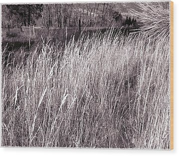 Tall Grasses Wood Print by Will Borden