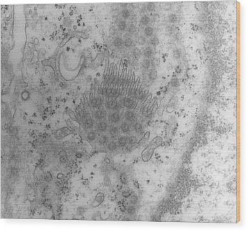Tem Of A Cell Nucleus Membrane Showing Pores Wood Print by Dr Kari Lounatmaa