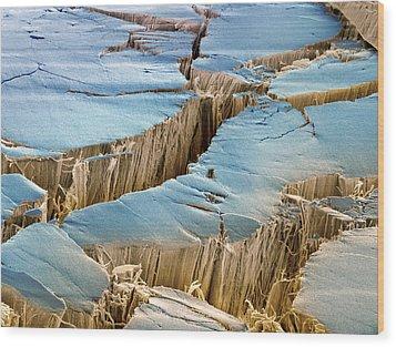 Tendon, Sem Wood Print by Steve Gschmeissner