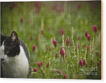 The Clover Field Wood Print by Kim Henderson