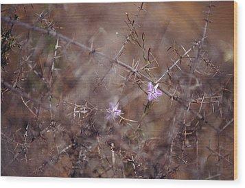 The Delicate Fringe Lily Flower Twining Wood Print by Jason Edwards