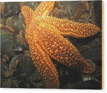 The Great Starfish Wood Print by Paul Ward