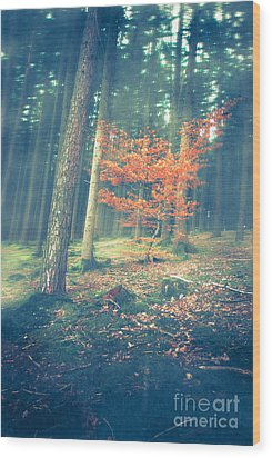 The Little Red Tree - Vintage Wood Print by Hannes Cmarits