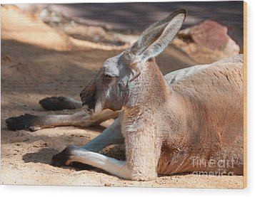 The Resting Roo Wood Print by Rob Hawkins