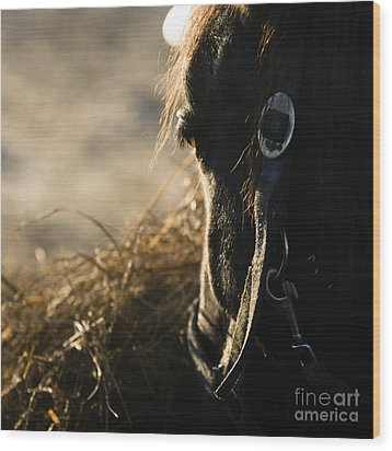 The Taste Of Fresh Hay  Wood Print by Angel  Tarantella