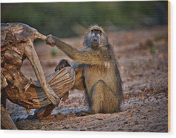This Is Botswana No.  6 - Watching The Sun Go Down Wood Print by Paul W Sharpe Aka Wizard of Wonders