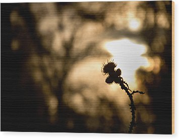 Thistle And Weeds Wood Print by Justin Albrecht