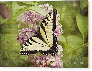 Tiger Swallowtail Butterfly Wood Print by Cheryl Davis