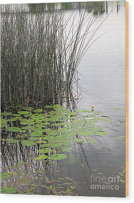 Tranquil Lillypads Of Spring Wood Print by Michelle Bergersen