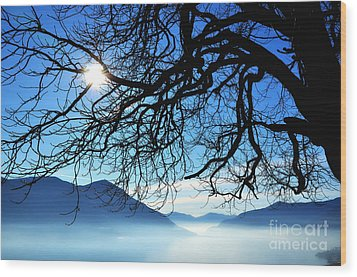 Tree Branches And Sun Wood Print by Mats Silvan
