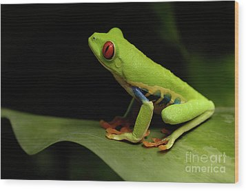 Tree Frog 14 Wood Print by Bob Christopher