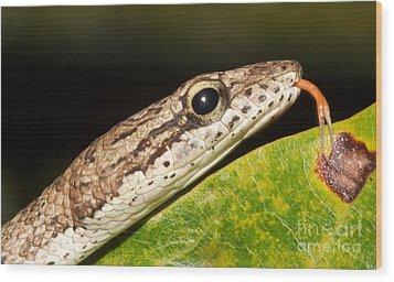 Tree Snake  Wood Print by Gary Bridger