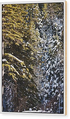 Trees In Taos Village Wood Print by Lisa  Spencer