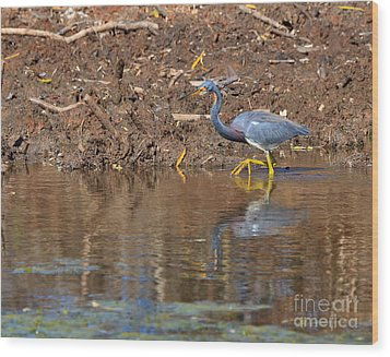Tricolored Heron In The Winter Marsh Wood Print by Louise Heusinkveld