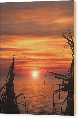 Tropical Sunset V6  Wood Print by Douglas Barnard