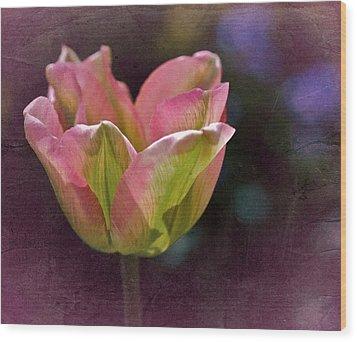 Tulipicity Wood Print by Richard Cummings