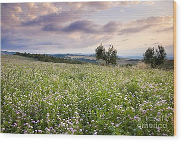 Tuscany Flowers Wood Print by Brian Jannsen