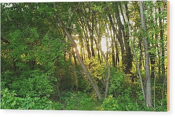 Twilight In The Woods Wood Print by Anna Villarreal Garbis
