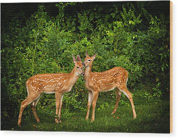 Twins Wood Print by Karol Livote