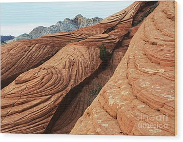 Twisted Landscape Wood Print by Bob Christopher