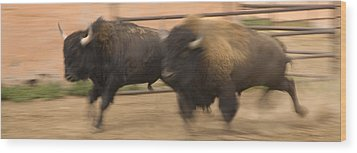 Two Bison Race Each Other Wood Print by Ralph Lee Hopkins