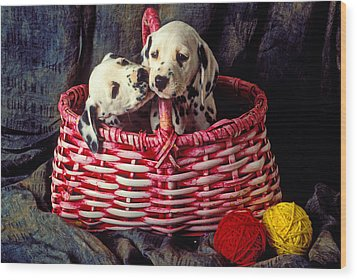 Two Dalmatian Puppies Wood Print by Garry Gay