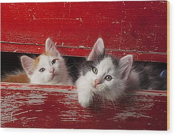Two Kittens In Red Drawer Wood Print by Garry Gay