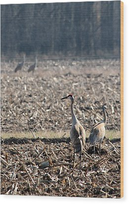 Two Pairs Of Sandhill Cranes Wood Print by Mark J Seefeldt