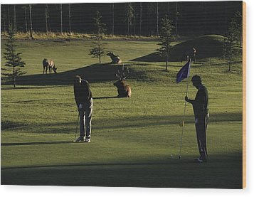 Two People Play Golf While Elk Graze Wood Print by Raymond Gehman