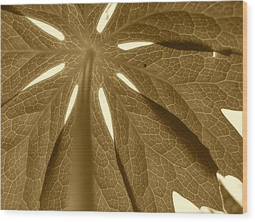 Umbrella In Sepia Wood Print by JD Grimes