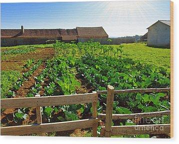 Vegetable Farm Wood Print by Carlos Caetano