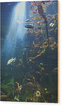 View Of Fish In An Aquarium In The San Wood Print by Laura Ciapponi
