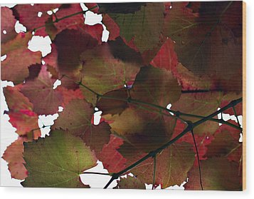 Vine Leaves Wood Print by Douglas Barnard