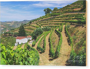 Vineyard Landscape Wood Print by Carlos Caetano