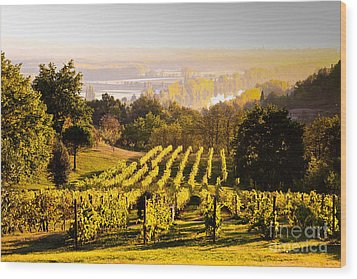 Vineyard Wood Print by Voisin and Phanie and Photo Researchers