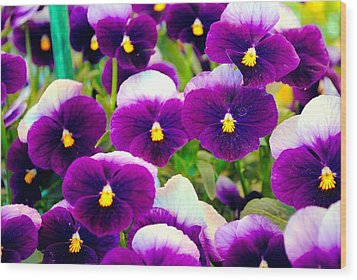 Violet Pansies Wood Print by Sumit Mehndiratta