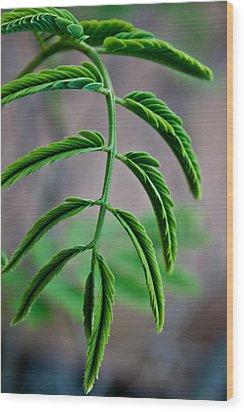 Vivid Plant Wood Print by Erik Hovind