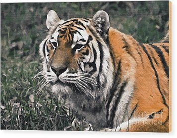 Watchful Bengal Tiger - Brush Stroke Wood Print by Darcy Michaelchuk