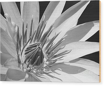 Water Lily Macro In Black And White Wood Print by Sabrina L Ryan