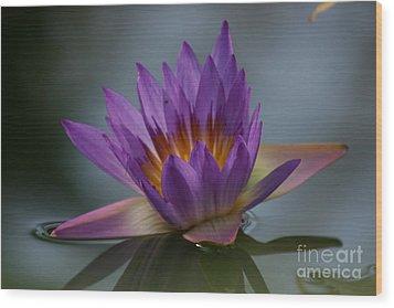 Water Lily Wood Print by Rachel  Harris