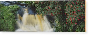 Waterfall And Fuschia, Ireland Wood Print by The Irish Image Collection