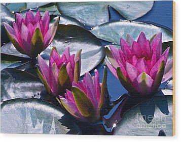 Waterlilies In Bright Sunlight Wood Print by Byron Varvarigos