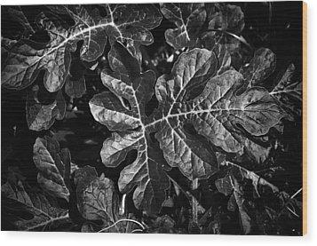 Watermelon Leaves Wood Print by Tom Bell