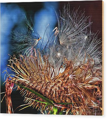 Weed Orgy Buzzed Wood Print by Steve Harrington