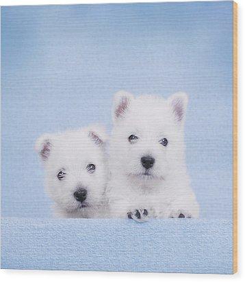 West Highland White Terrier Puppies Wood Print by Waldek Dabrowski