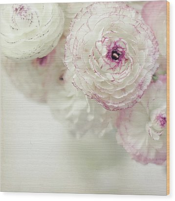 White And Pink Ruffled Ranunculus Flowers Wood Print by Cindy Prins