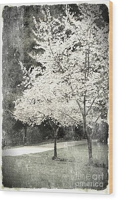 White Blooming Tree Wood Print by Danuta Bennett