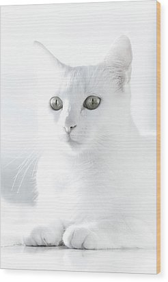 White Cat Wood Print by Vilhjalmur Ingi Vilhjalmsson
