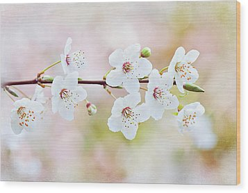 White Cherry Blossom Wood Print by Jacky Parker Photography