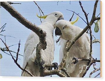 White Cockatoos Wood Print by Kaye Menner